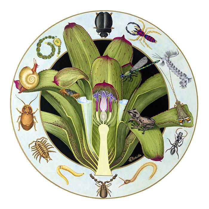 braidao-bromeliad-dwellers_700x700